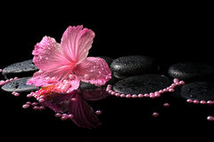 Beautiful spa still life of pink hibiscus, drops and pearl beads Stock Image
