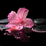 Beautiful spa still life of pink hibiscus, drops and pearl beads Stock Photo