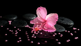 Beautiful spa still life of pink hibiscus, drops and pearl beads Royalty Free Stock Images