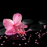 Beautiful spa still life of pink hibiscus, drops and pearl beads Royalty Free Stock Photography