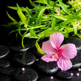 Beautiful spa still life of pink hibiscus flower, twig bamboo  Royalty Free Stock Photo