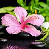 Beautiful spa still life of pink hibiscus flower, twig bamboo an Stock Images