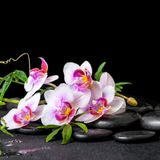 Beautiful spa still life of purple orchid phalaenopsis and green Royalty Free Stock Image