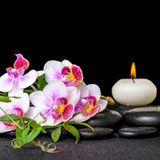 Beautiful spa still life of purple orchid phalaenopsis, green twigs and candle on black zen stones with drops royalty free stock image