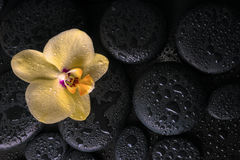 Beautiful spa still life  of yellow orchid (phalaenopsis) Stock Images