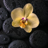 Beautiful spa still life  of yellow orchid (phalaenopsis) Royalty Free Stock Photo