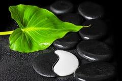 Beautiful spa still life of Yin-Yang stone texture symbol, green Royalty Free Stock Photo
