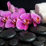 Beautiful spa stilleven van bloeiend takje van gestript viooltje Stock Foto's