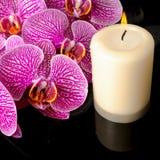 Beautiful spa stilleven van bloeiende takje gestripte violette orchidee Royalty-vrije Stock Fotografie