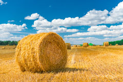 Beautiful spaces for agriculture Stock Image