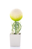 Beautiful sphere shape flower in white square pot Royalty Free Stock Image