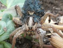 beautiful spider Στοκ Εικόνες