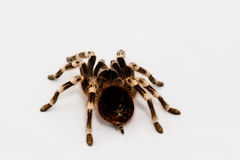 Beautiful spider Stock Photos