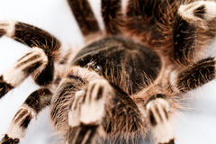 Beautiful spider Royalty Free Stock Photography