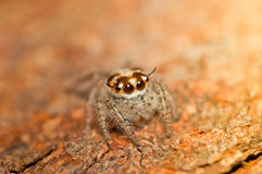 Beautiful spider. Royalty Free Stock Photos