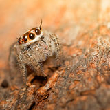 Beautiful spider. Stock Photography