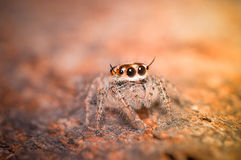 Beautiful spider. Royalty Free Stock Photography