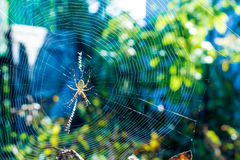 The beautiful spider braids the web. The big beautiful spider braids the web Stock Photo