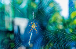 The beautiful spider braids the web. The big beautiful spider braids the web Stock Photos