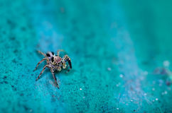 Beautiful spider on old green wall Royalty Free Stock Photo