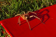 Spider sitting on my book. bookworm. Beautiful Spider sitting on my red book. Bookworm, Halloween concept royalty free stock photography