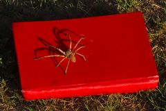 Spider sitting on my book. bookworm. Beautiful Spider sitting on my red book. Bookworm, Halloween concept stock photos