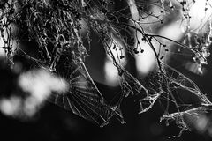 Beautiful spider web in black and white. Royalty Free Stock Images
