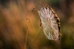 Beautiful spider web on grass Royalty Free Stock Photos
