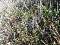 Beautiful spider web stock photography