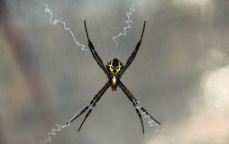 Free Beautiful Spider With Yellow Alien Face On The Body Royalty Free Stock Photos - 94558458