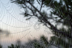 Beautiful spiderweb with dew drops Stock Images