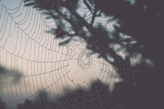 Beautiful spiderweb with dew drops Royalty Free Stock Photos