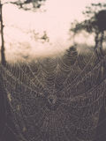 Beautiful spiderweb with dew drops Stock Photography