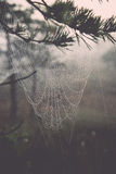 Beautiful spiderweb with dew drops Stock Photos