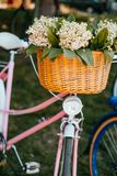 Flowers in a bicycle basket royalty free stock image