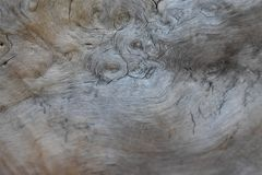 Spiral pattern in a tree trunk. Beautiful spiral patterns on the inside of a tree trunk stock photo