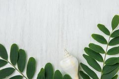 Beautiful Spiral Sea Shell Locust Tree Branches with Green Leave. S on White Wood. Summer Spring Vacation Wellness Body Skin Care Organic Cosmetics Concept Stock Photos