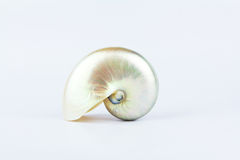 Beautiful spiral seashell Stock Image