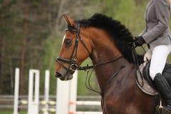 Beautiful sport horse portrait in summer Stock Photo