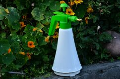 Beautiful Spray Can In Flowers
