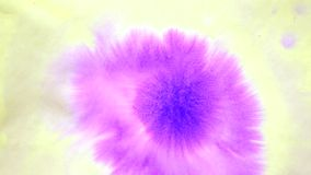 Beautiful Spreading Purple Ink Drops on yellow Wet Smooth Surface. Abstract Close-up Shot. Pink colour stock video