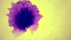 Beautiful Spreading Purple Ink Drops on yellow Wet Smooth Surface. Abstract Close-up Shot. Pink colour stock footage