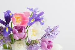 Beautiful spring flowers on white background. The beautiful spring flowers on white background royalty free stock image