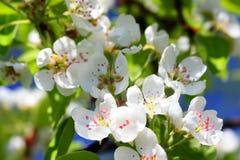 Beautiful spring Stock Image