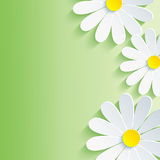 Beautiful spring abstract background, 3d flower ch. Amomile. Vector floral background. Vector illustration Royalty Free Stock Image