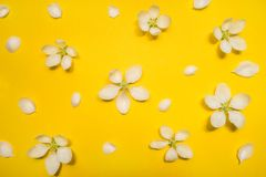 Beautiful spring apple flowers at yellow background. Spring-summer concept stock images