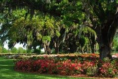 Beautiful Spring Azaleas Royalty Free Stock Images