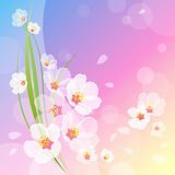 Beautiful spring background Royalty Free Stock Photos