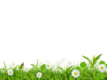 Beautiful spring background Royalty Free Stock Photography