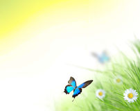 Beautiful spring background Stock Images
